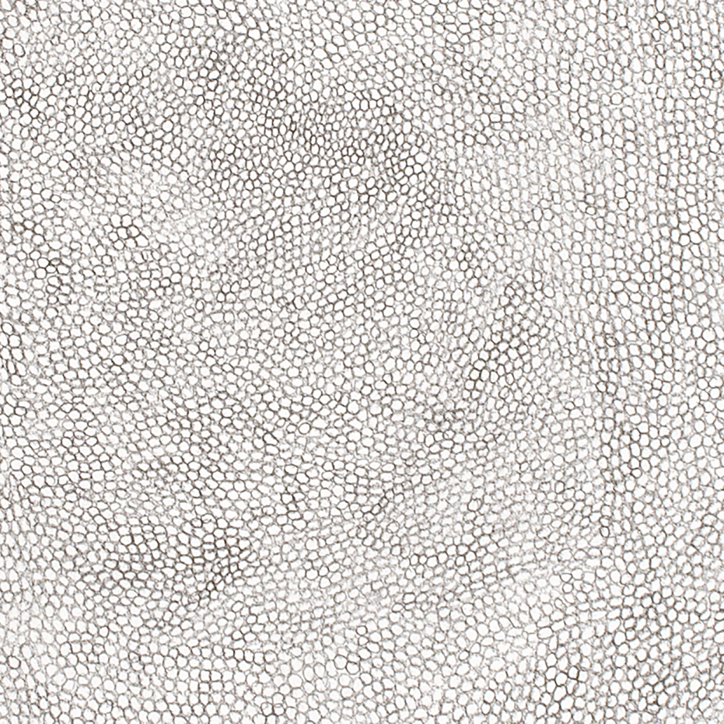 (Detail) Circle Within Large Rectangle,2007 50 by 38 inches Graphite on paper