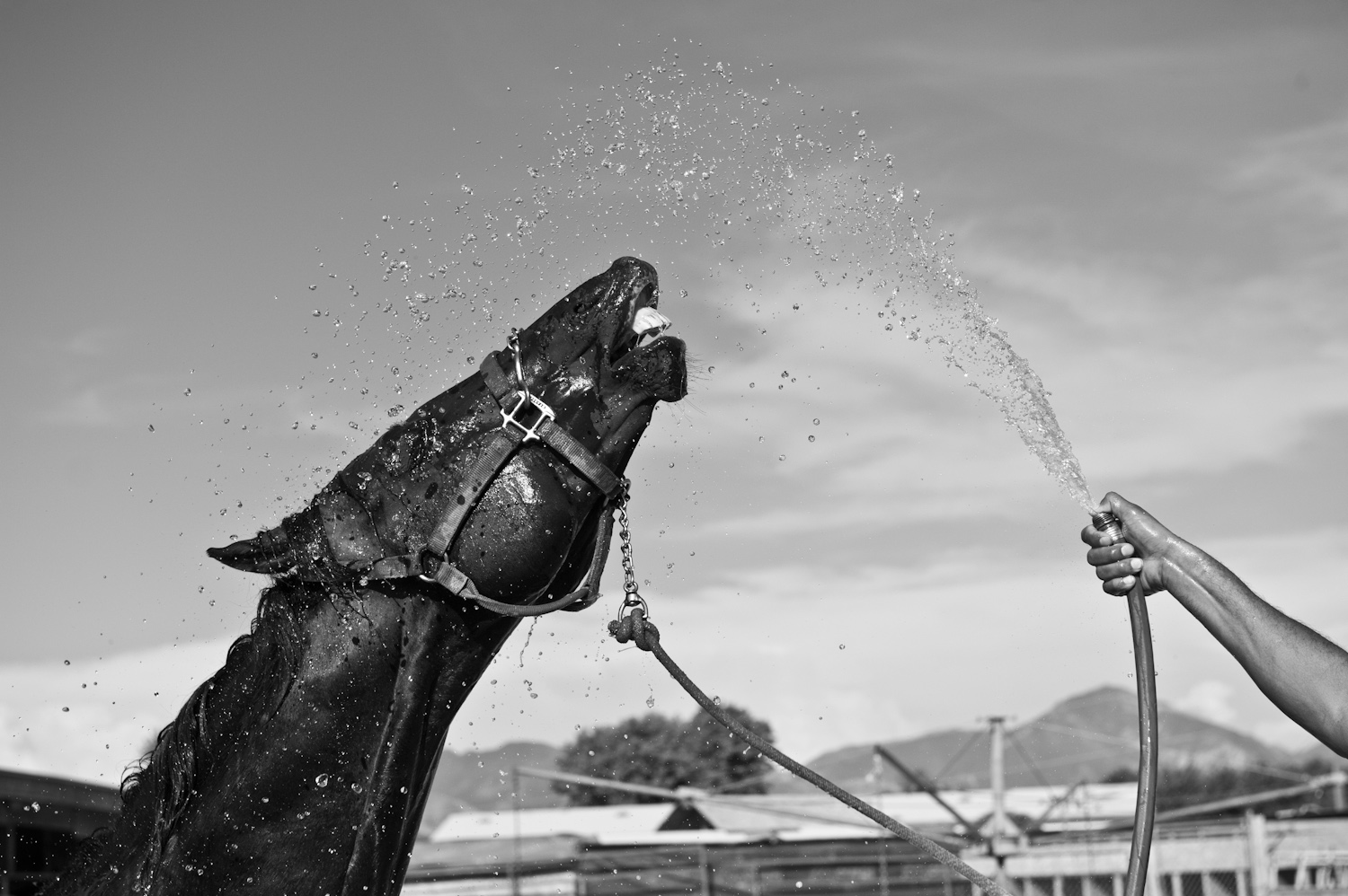 On a hot summer day, Jose Luis Pimentel cools down his horse.