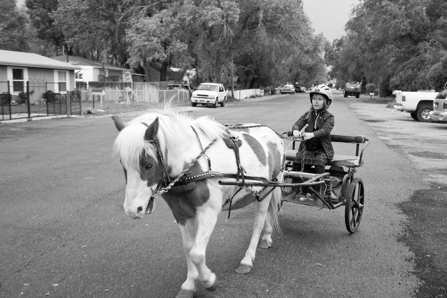 Willow Alexander rides a pony-drawn cart to school.