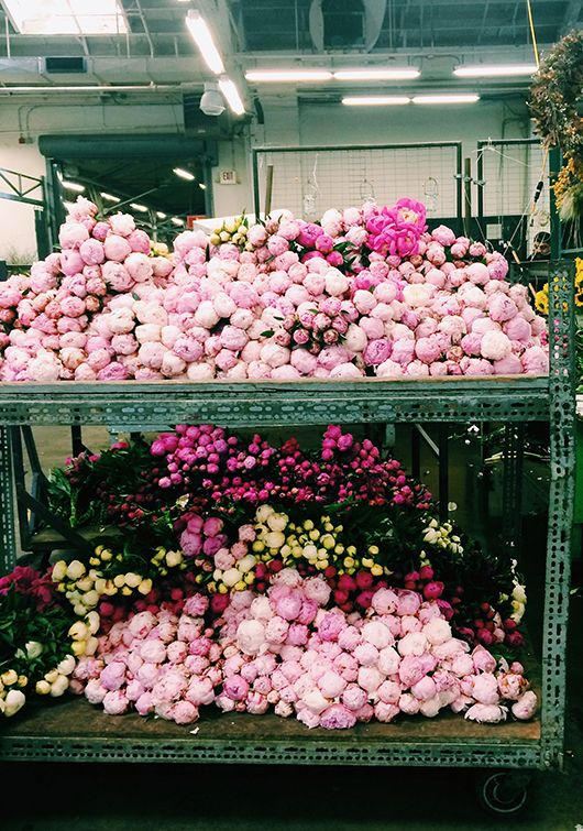 i literally don't know one woman who doesn't love peonies.  As in the more the merrier, seriously.  and brad, on the off chance you read this, here's your subtle hint