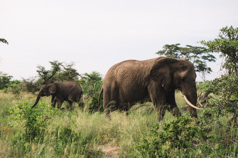 melissademata.com | Abu Camp Okavango Delta Botswana - Abu Herd African Bush Elephants