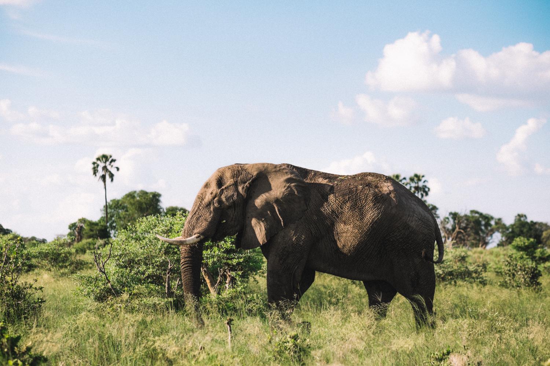 melissademata.com | Abu Camp Okavango Delta Botswana - African Bush Elephant