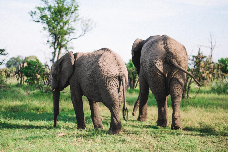melissademata.com | Abu Camp Okavango Delta Botswana - Elephants