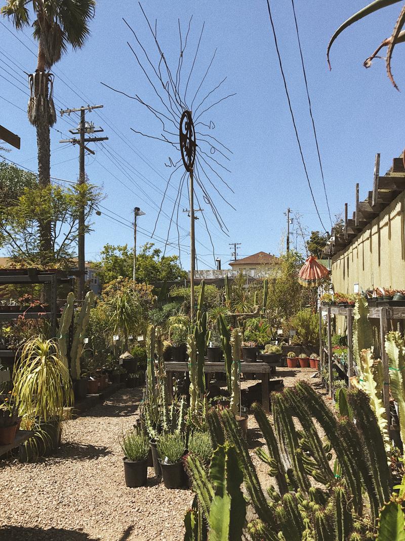The Dry Garden Nursery   Succulent & Cactus