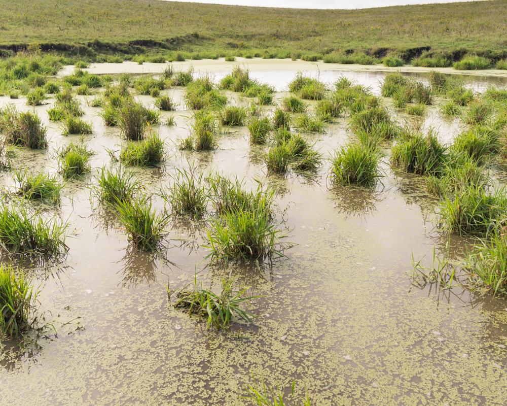 A pond in the salt marshes of southeastern Nebraska.