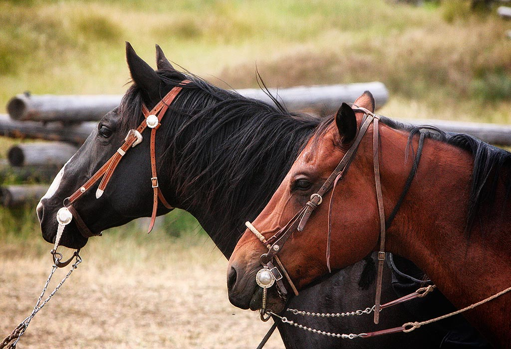 the-bridle-shop-home-img7.jpg