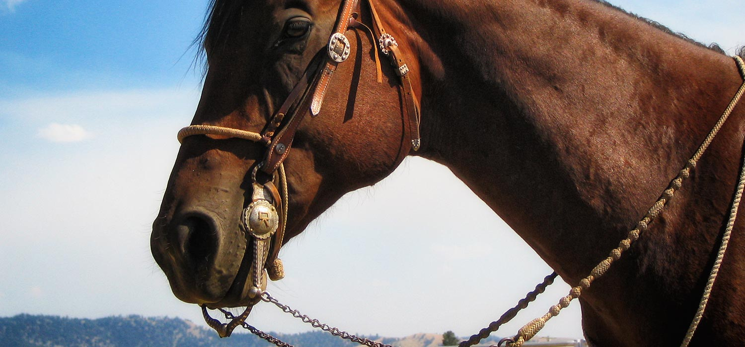 the-bridle-shop-home-img12.jpg