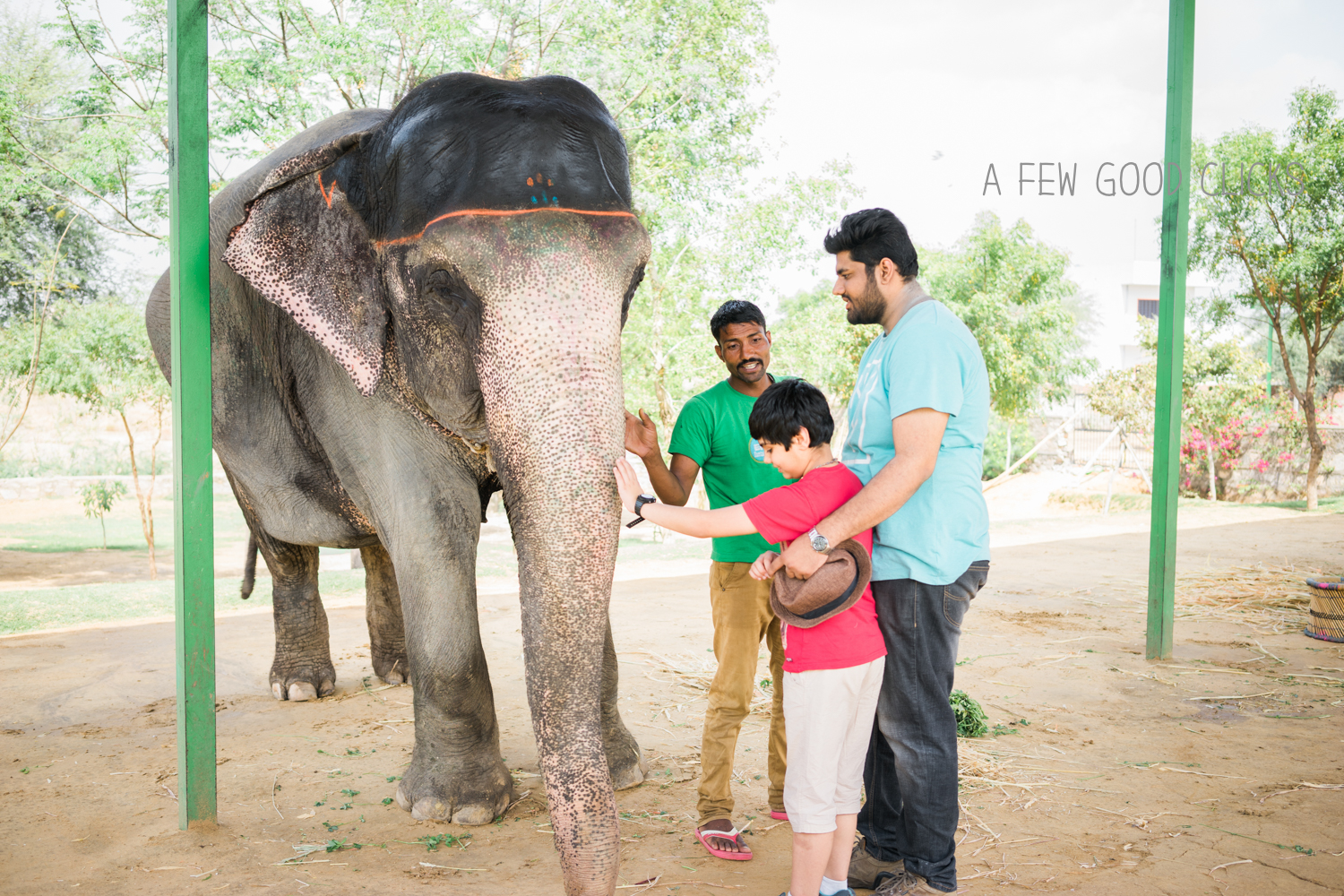 Rendezvous with Chanchal -  Getting to know each other. If you wish to explore the intelligence of an elephant, you don't have to cunningly disguise to intrude the herd, rather she welcomes you with a warm heart. #elephantexperience in #India.