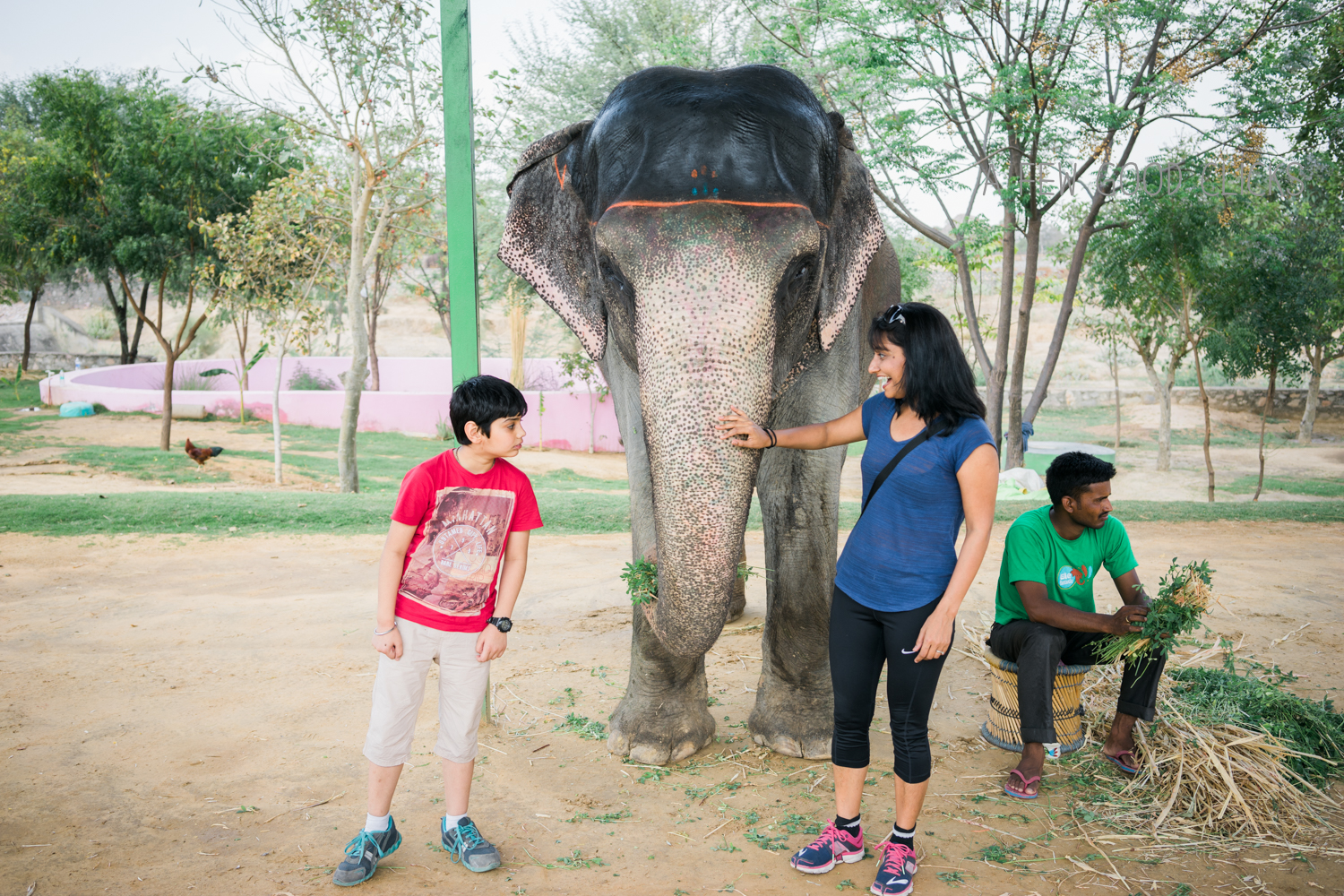 Confession time -  Even though I am a big fan of elephants, I was scared to be near our gigantic friend.