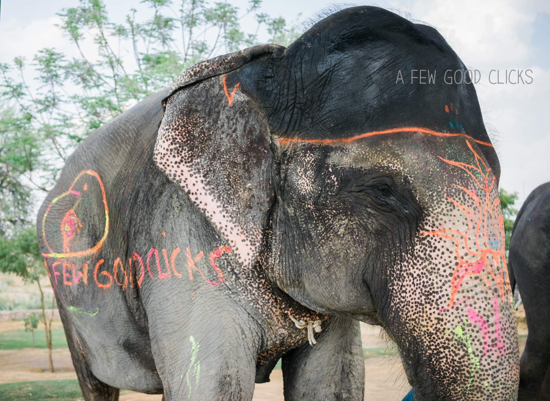 elefantastic-experience-jaipur-photography-afewgoodclicks.net-31.jpg