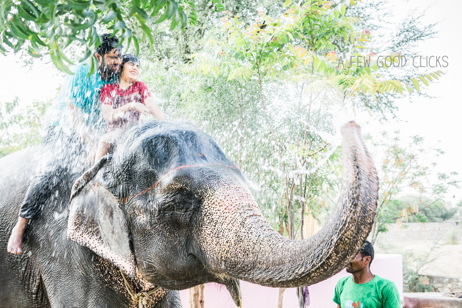 Elephant showering its riders at Elefantstic is truly  a fantastic way to have fun in Jaipur,  India.