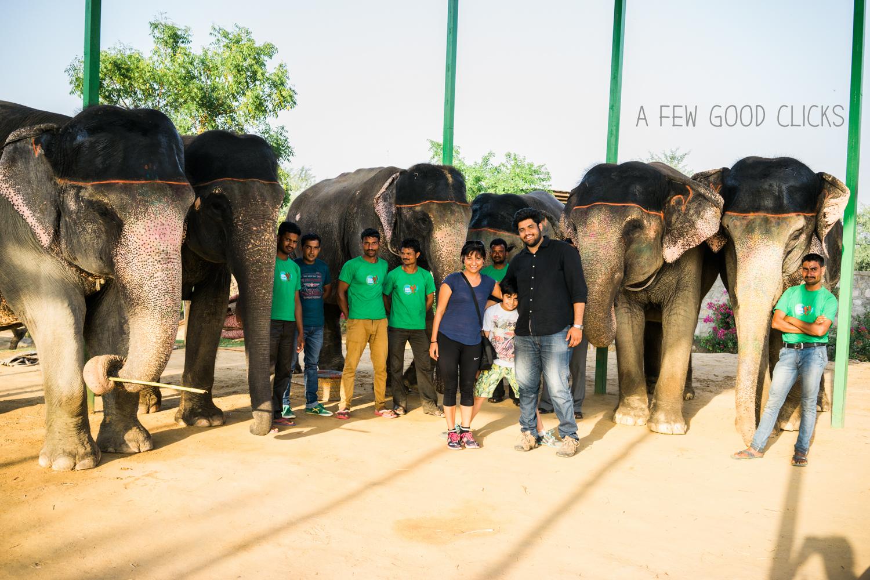 elephants-herd-elefantastic-experience-ends-photography-afewgoodclicks