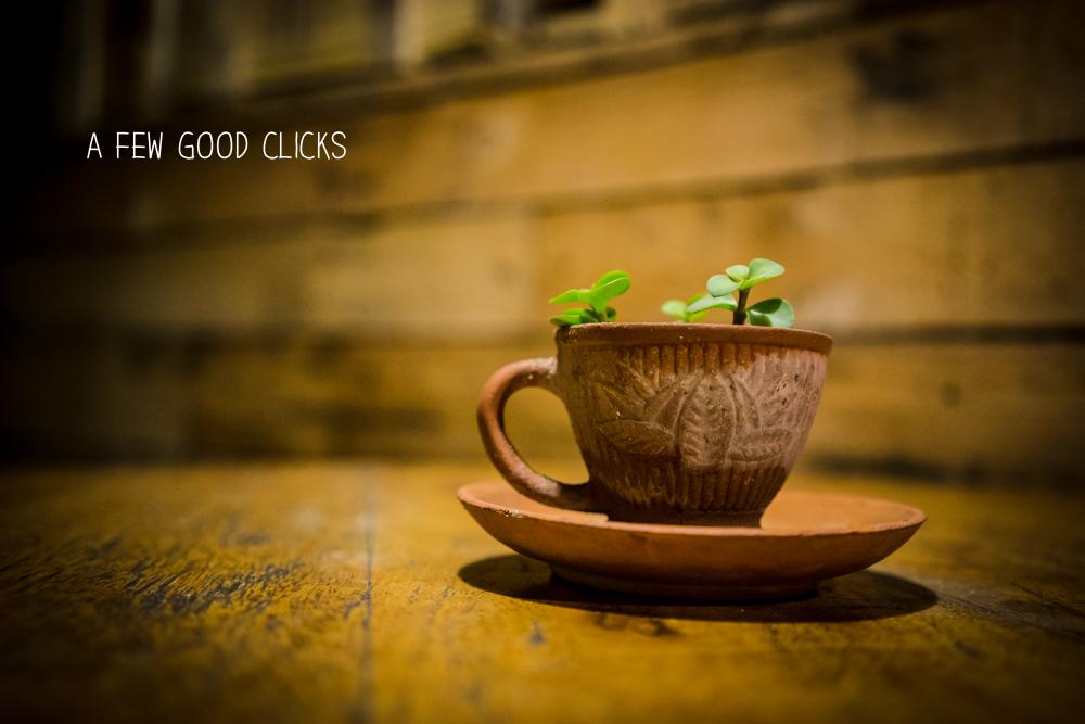 Creative use of coffee cup to grow herbs. Amazing, Amazing, Amazing!