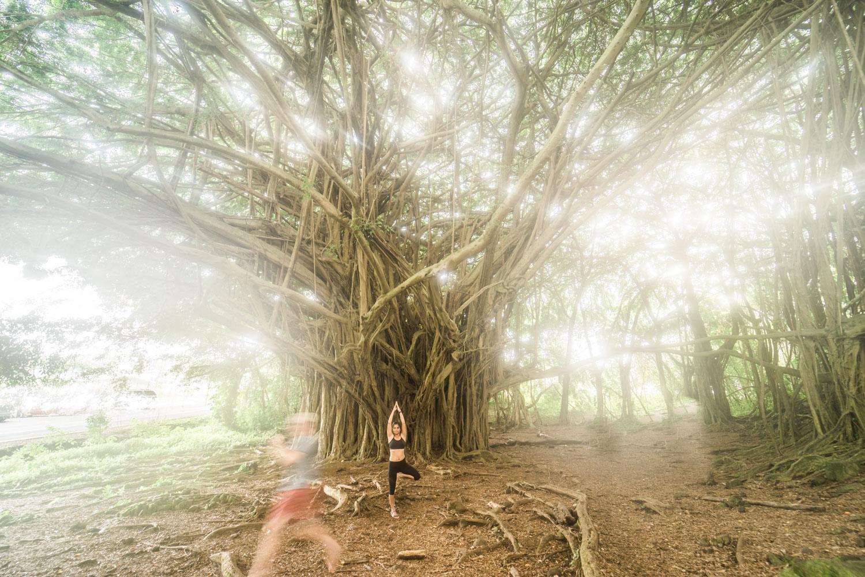 banyan-tree-yoga-pose-rainbow-falls-hawaii-landscape-photography-by-afewgoodclicks-net-10.jpg