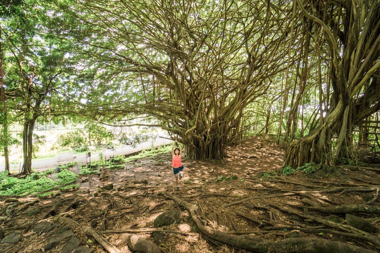 tree-pose-yoga-under-banyan-tree-rainbow-falls-photo