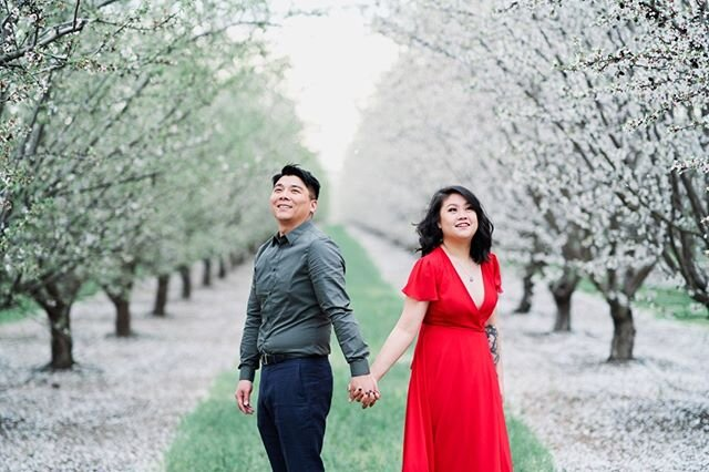 Another one from Almond Blossom engagement session. . . . #afewgoodclicks #sonya7iii #bayareaengagementphotographer #bayareaengagementphotography #bestlocation #ocf #magbox #imengaged #bridestobe #chinesedress #coupleshoot #californiaengagementphotographer #cherryblossom #almondorchards #instadaily #instalove #localphotographer #elopementphotographer #destinationphotographers #californiaphotographer #sanjoseengagementphotographer #cherryblossomlove #couplesphotoshoot #bayareaphotographer #engagementphotographers #elopementphotographer #bayareaweddingphotographer #chinesecouple #chineseprewedding