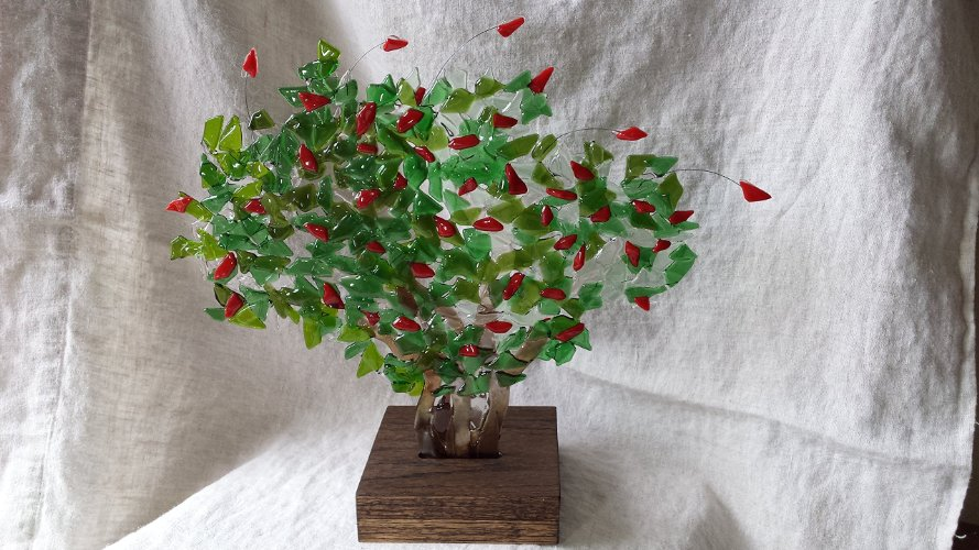 Coral Bean Tree