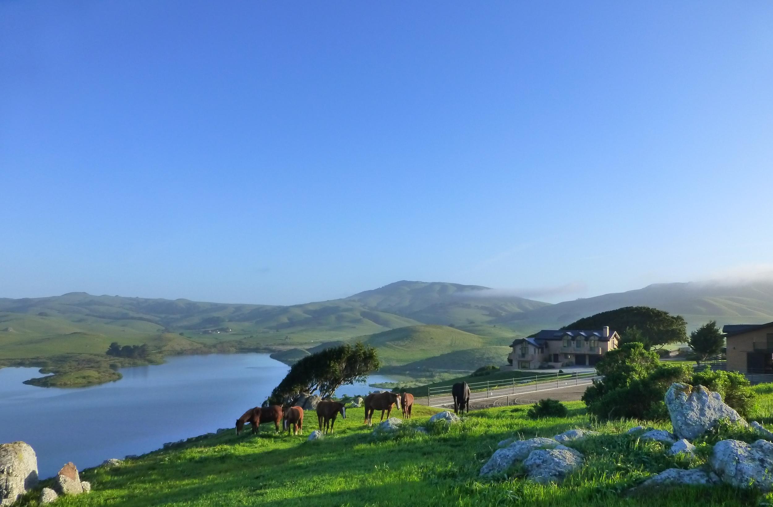 April morning.house,arena.horses at rocks and tree.P1030502.JPG