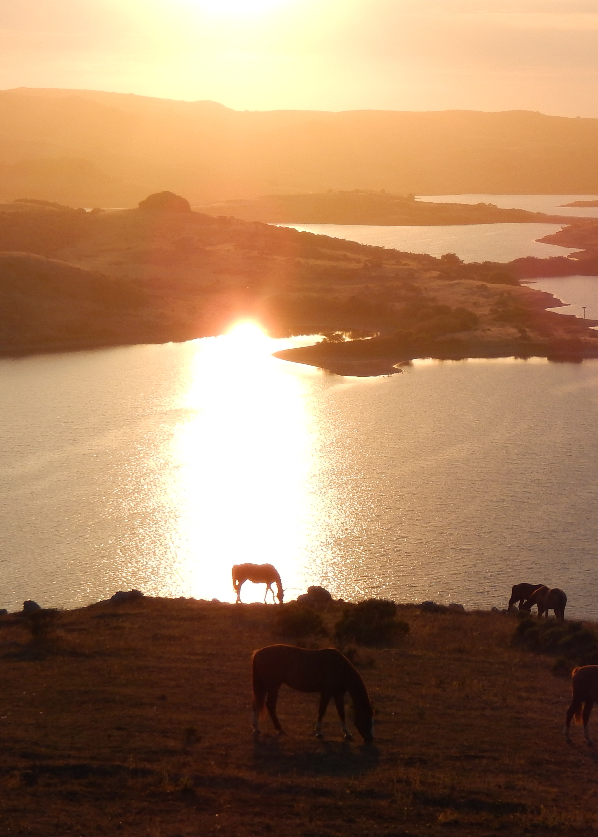Danehills foal inAugust red sunset.JPG