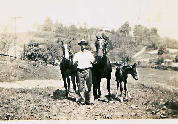 Lawrence with his horses.