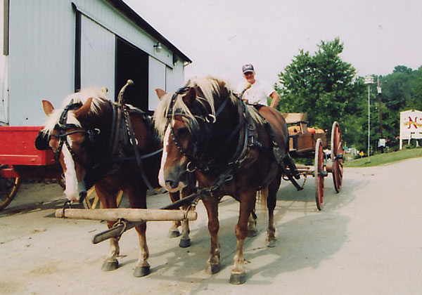 Clarence and his team, Bob & Barb in the Neltner's Farm barnyard. Circa 2003.
