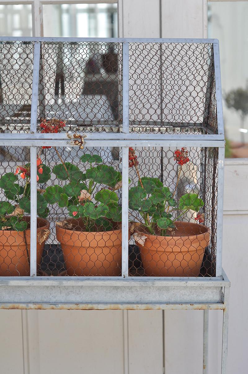 Geranium hutch