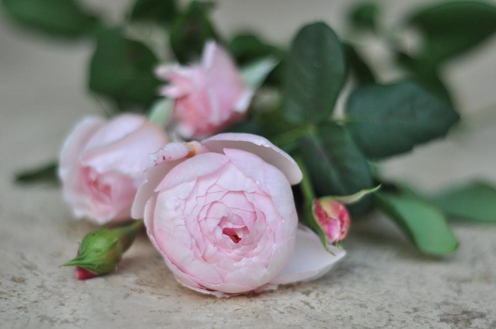 Pink flowers © Donna Vercoe
