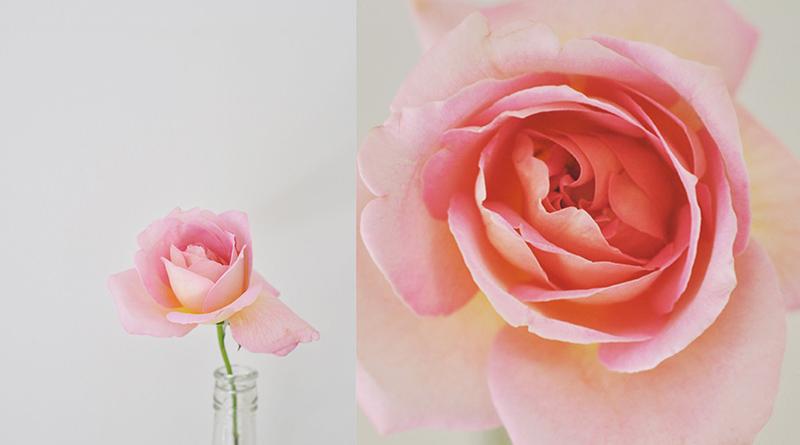 Garden Roses © Donna Vercoe