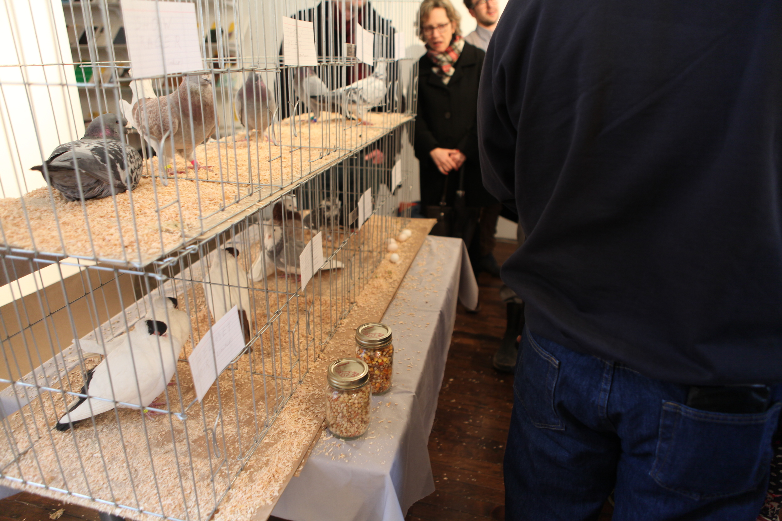 Domesticated pigeons were brought into the gallery.