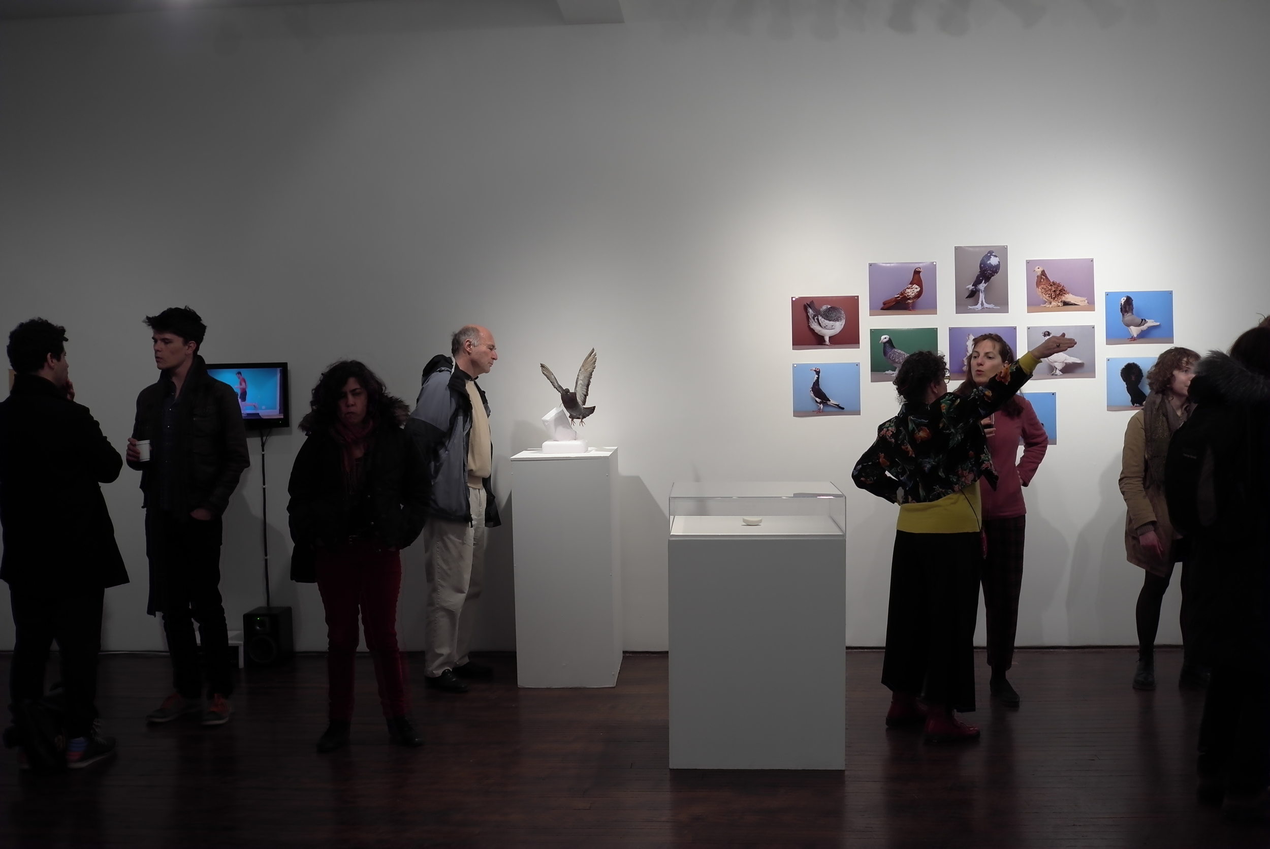 View of the installation with beauty pagent pigeons.