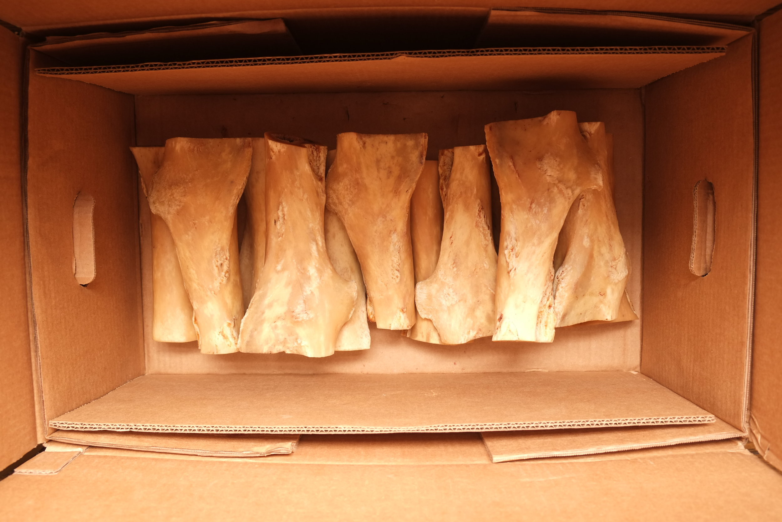 Some of the 23 horse femurs cleaned, ready to be cut for the production of the bowls.
