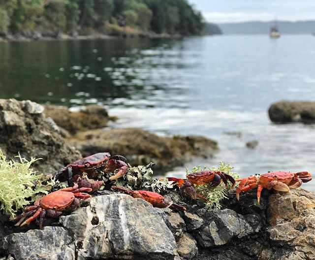 Crab family portrait. Hard to get one where everyone's smiling, but I think we did it.  #orcasisland #sanjuanislands