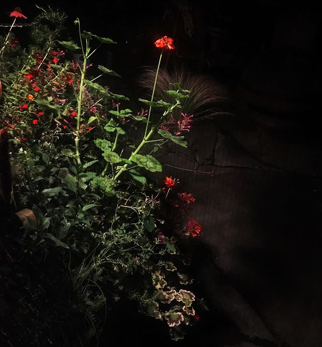 Sometimes before I crawl in, I take one last look at the night garden through the screen.