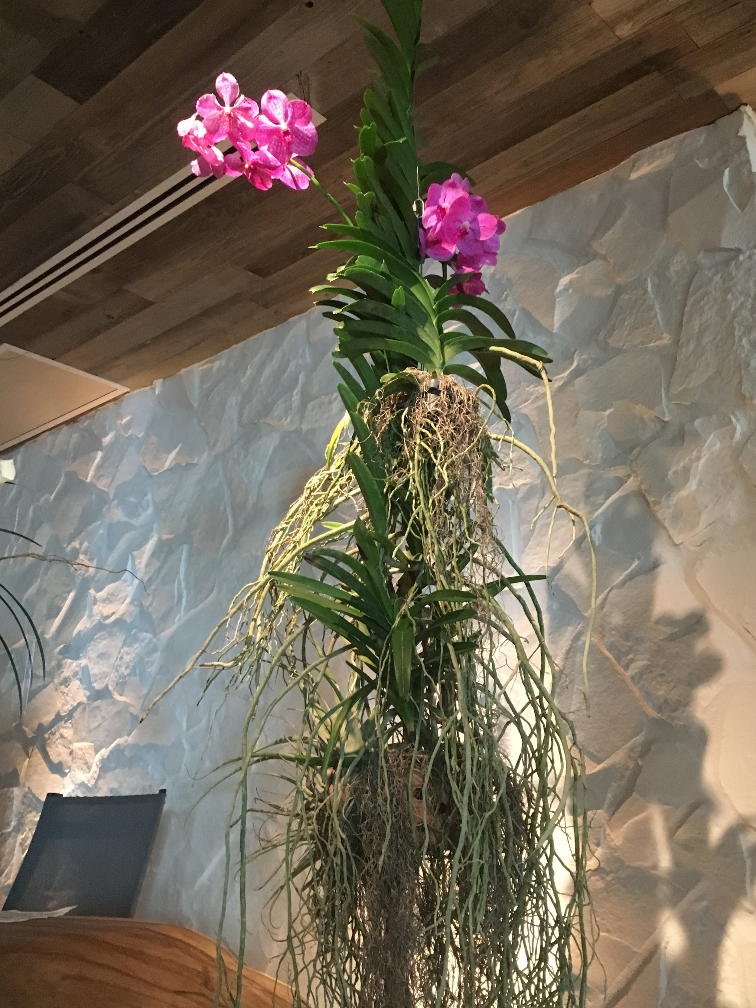 Flowers and green plants throughout the Lobby at 1 Hotel South Beach