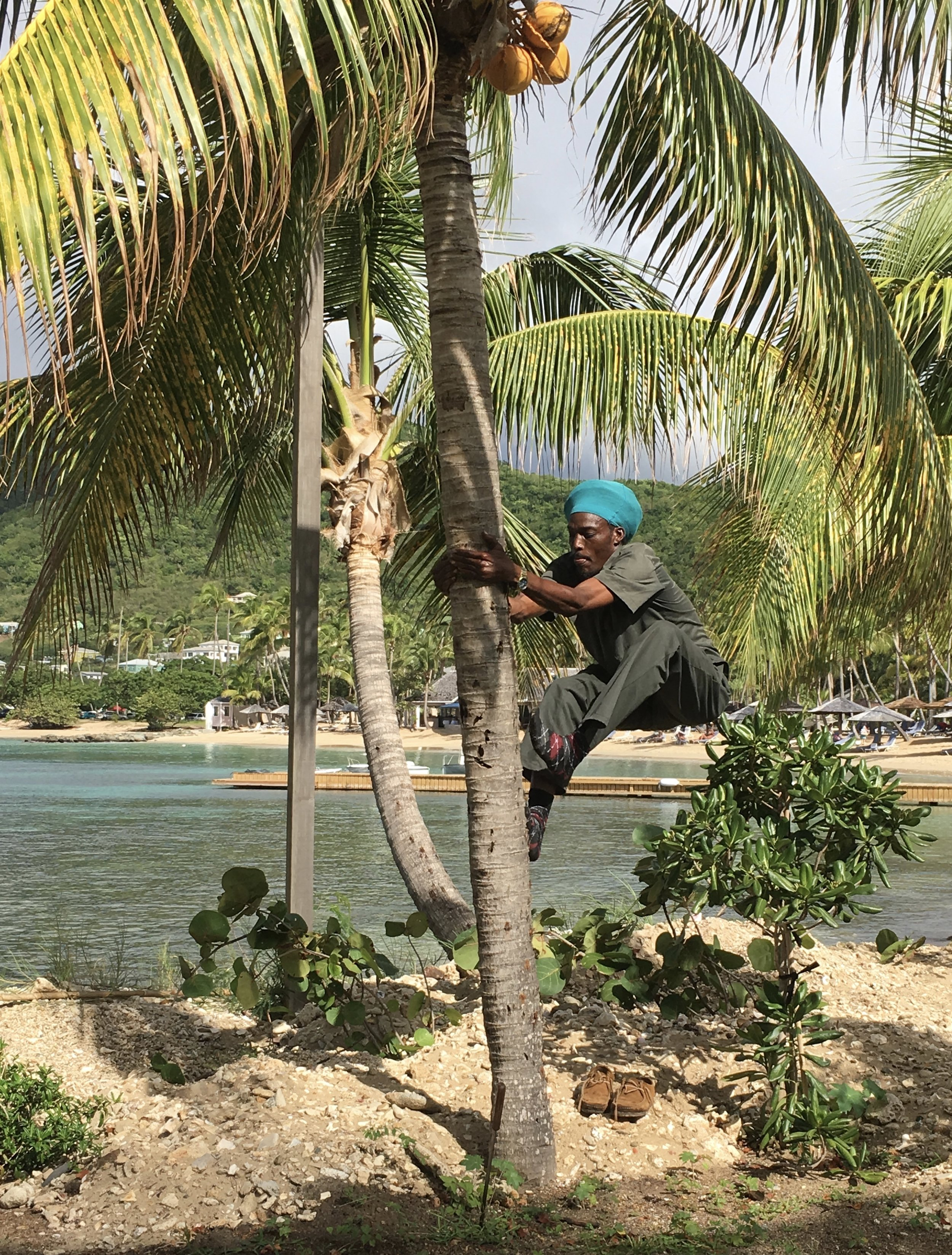 """""""Smooth"""" Climbs for coconuts"""