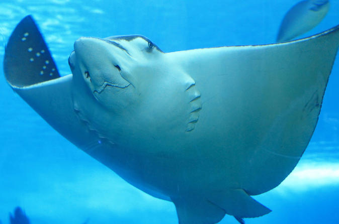 belize-hol-chan-marine-reserve-and-shark-ray-alley-snorkel-tour-from-in-san-pedro-122286.jpg