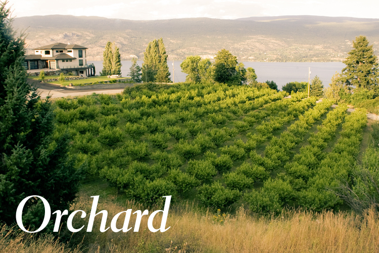 orchard_thumb.jpg