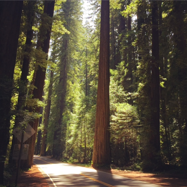 Winding through the magical fairyland of the Avenue of the Giants