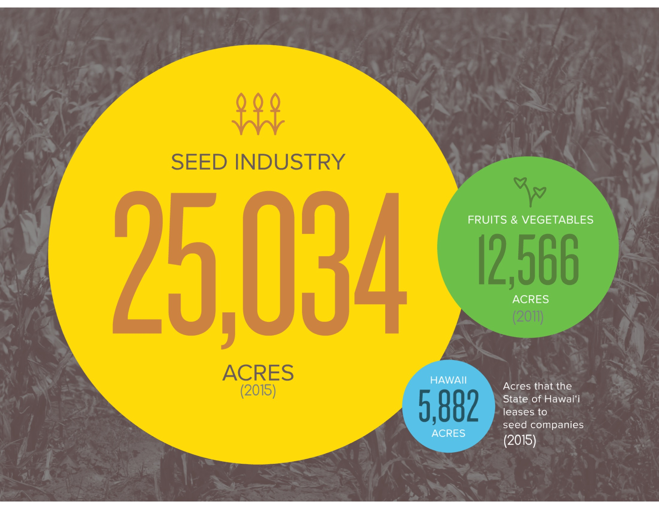 The seed industry's footprint (24,700 acres) is 72% of the total area planted to crops other than sugarcane or pineapple (34,400 acres).