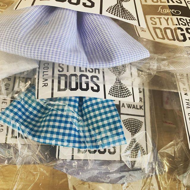 Blue skies and bow ties @bakery_lorraine @therimsa #bowtie #dogsinbowties