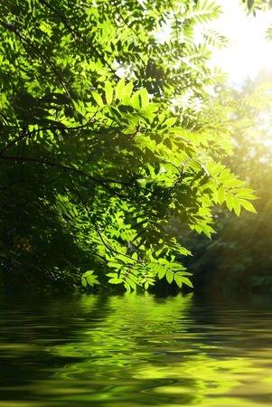 Rowan Tree over River