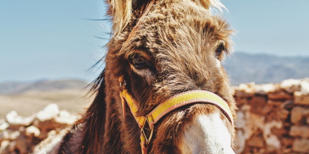 Don't be a donkey -