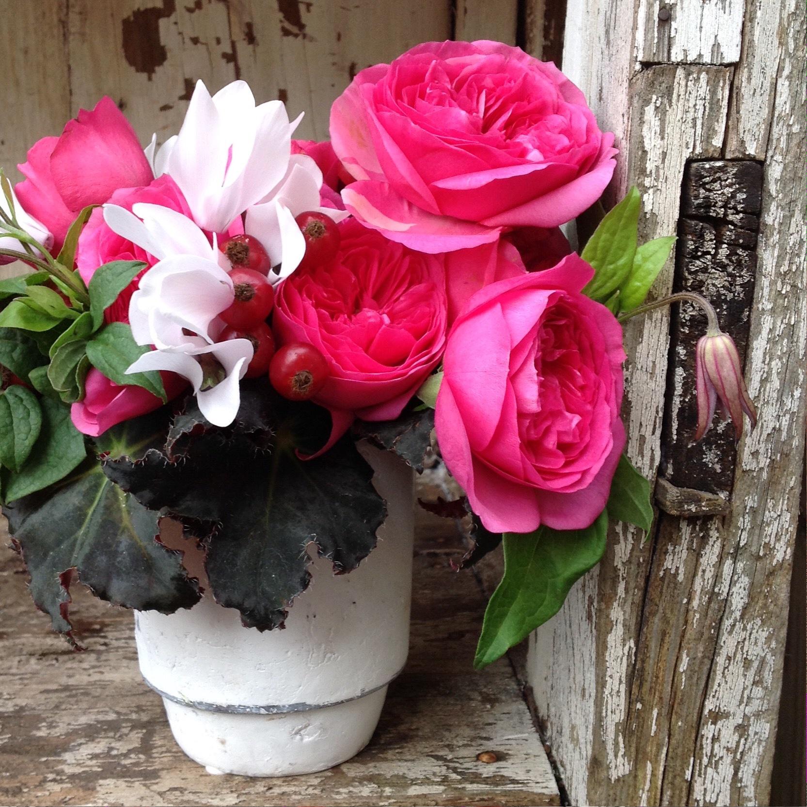 Pink Baroness Garden Rose Posie starting at $100
