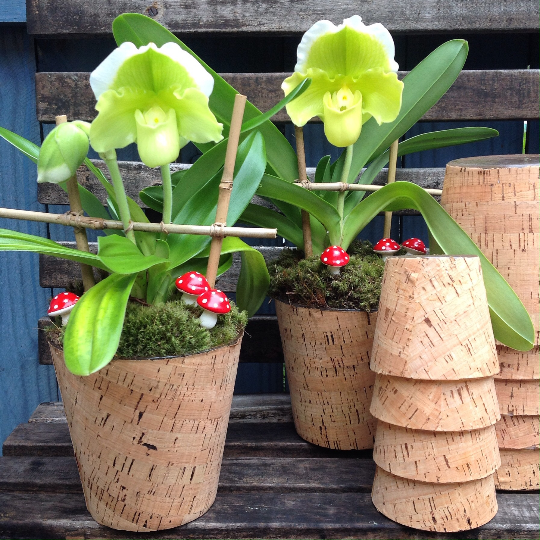 All kinds of unusual orchids starting at $100