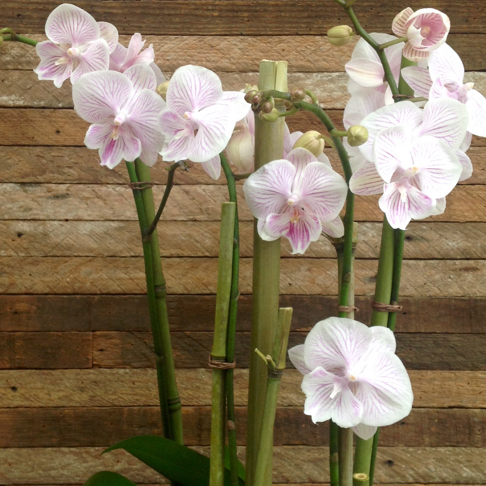Springy orchid plantings starting at $110