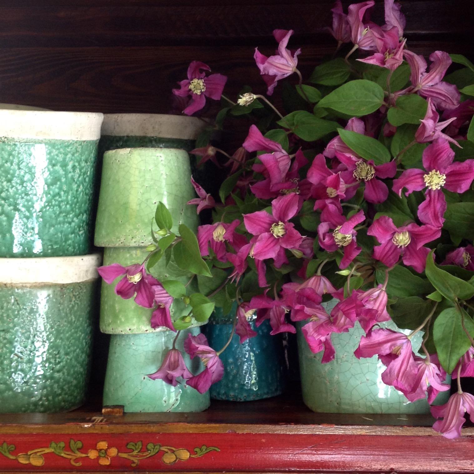 Clematis in green pots.jpg