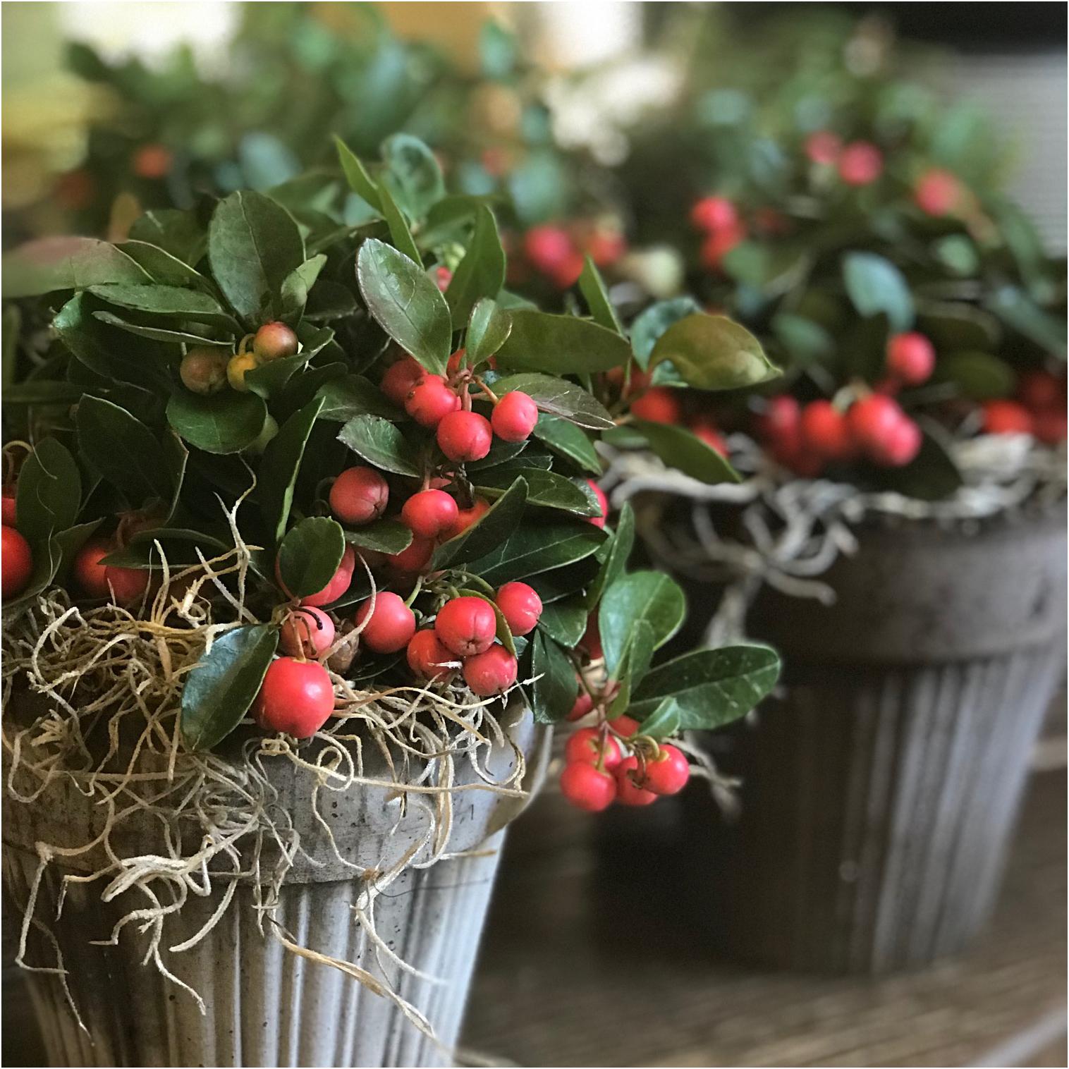 Winter berry.jpg