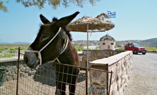 This is the friendly donkey at Faros Market.