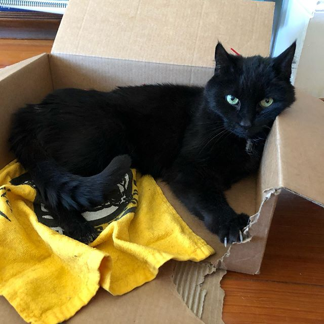 Henry is super excited for the Bruins game tonight 😻  #gobruins #bruinscat #petacupuncture #petacupunctureworks #blackcatsaregoodluck #ilovecats #henryjames