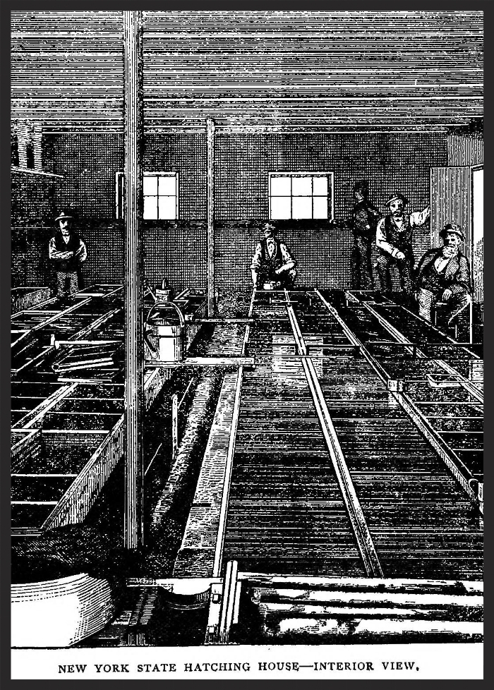 New York State Hatching House—Interior View (ca. 1879).Image source:  Fish Hatching and Fish Catching , 1879,Page 41 (assessed from  Internet Archive , original contributor  Cornell University Library ) by by R.B. Roosevelt and Seth Green is licensed under  Public Domain Mark 1.0